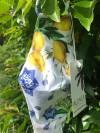 Wasbaar Mondkapje Limoenen van Phax Chilla